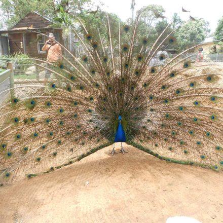 Featherdale-Wildlife-Park-12